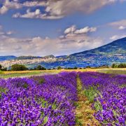 Assisi e il Lavandeto